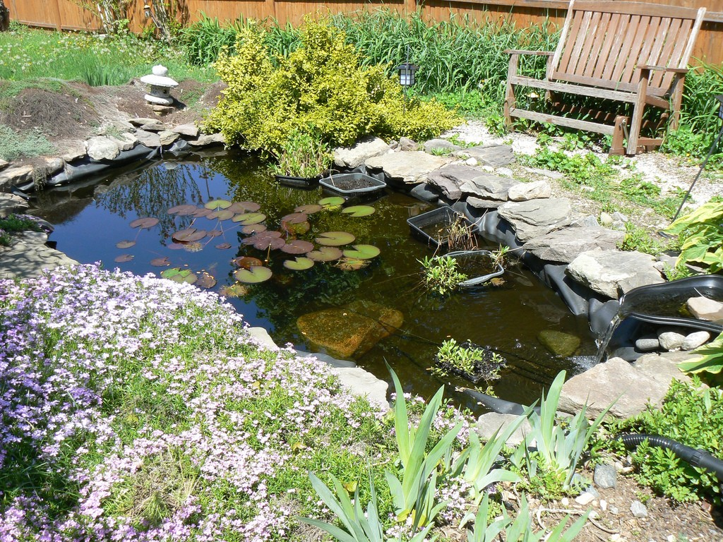 diy water gardens: designing a backyard water garden AYOYLFU