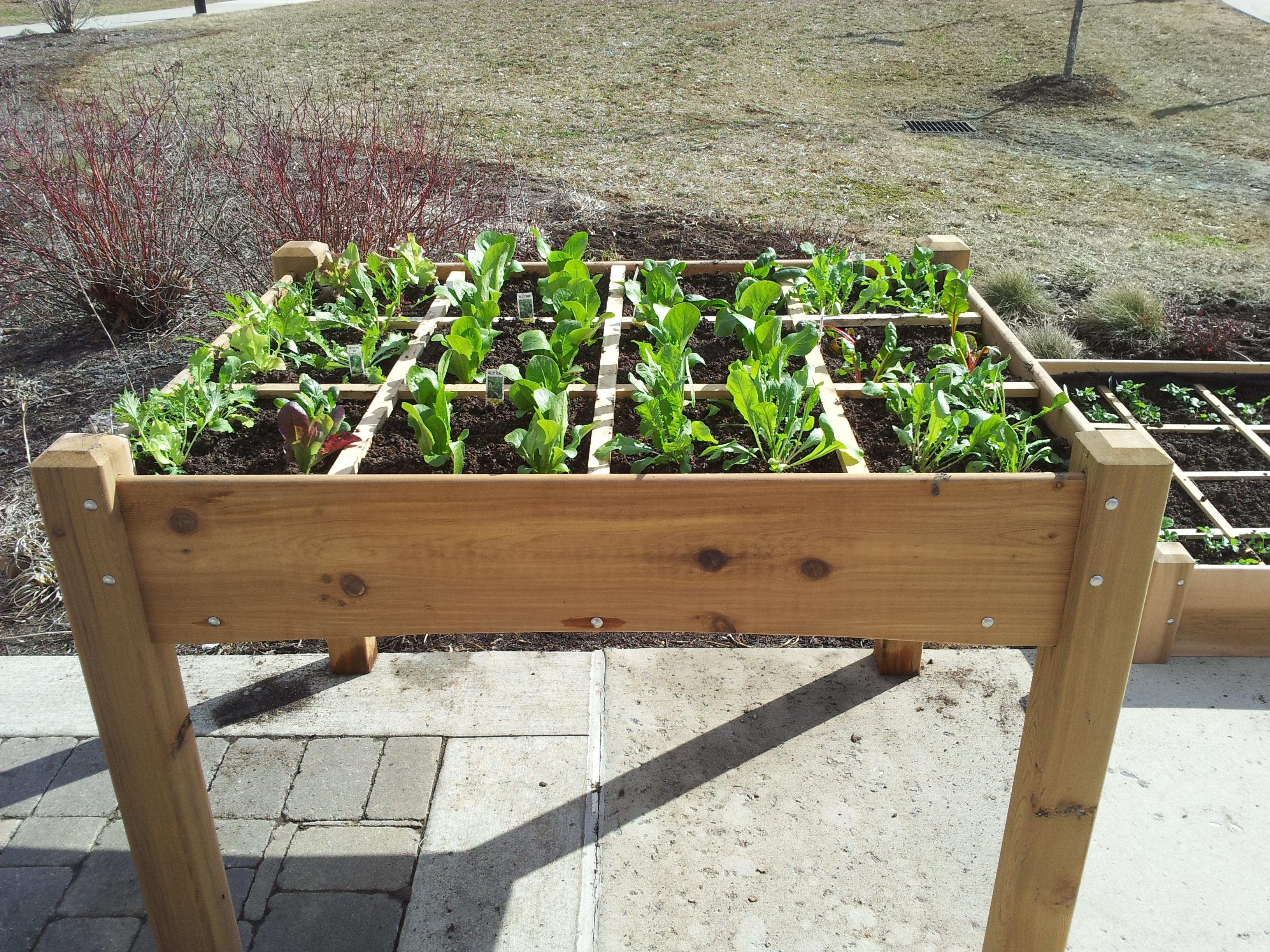 garden tables all cedar garden table-$429 SLZASIY