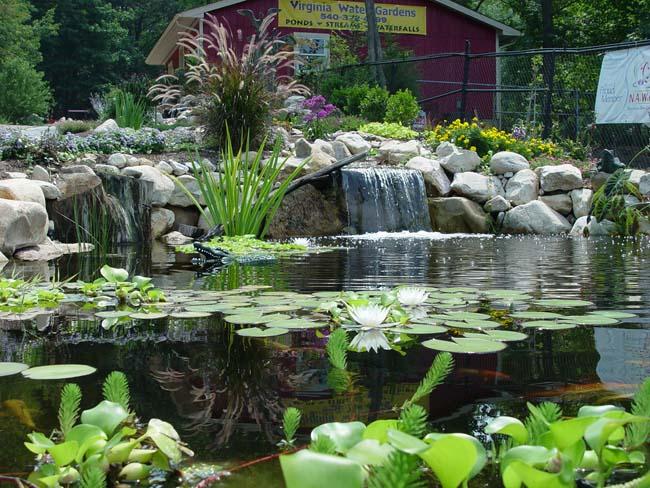 natural water gardens - natural water .com | natural water HBDUXNY