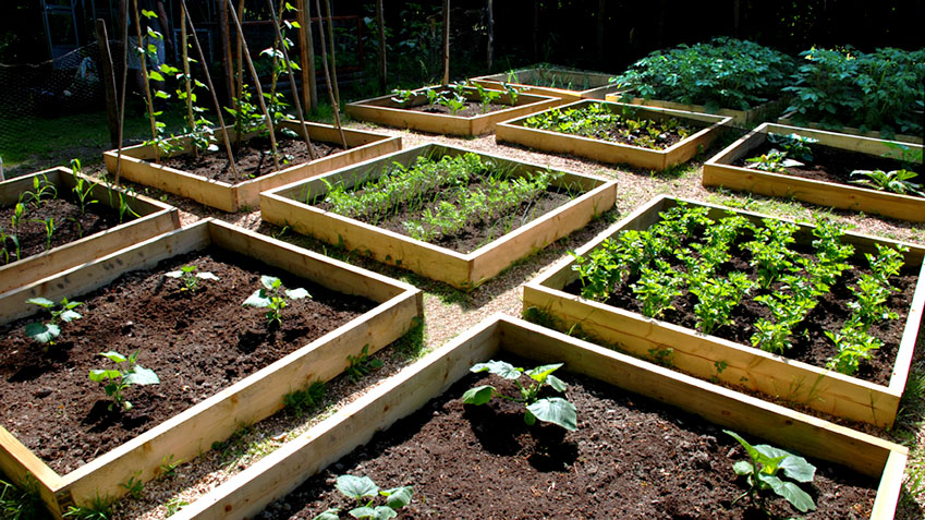 raised bed garden raised bed gardening EARWLKQ
