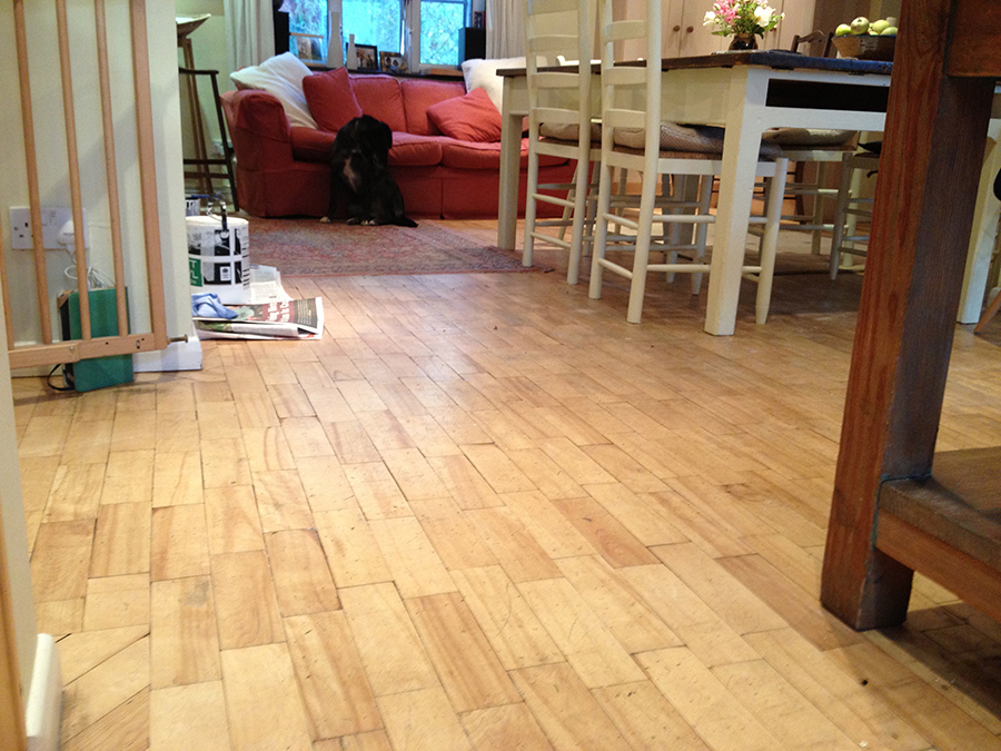 beech parquet floor with black labrador VCBPNVZ