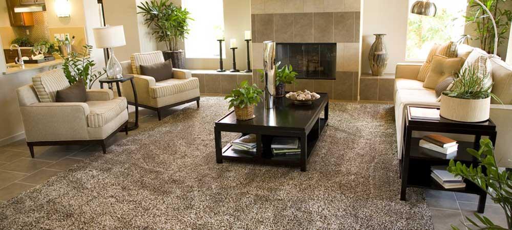 best carpet care LJOOLGY
