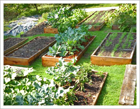 raised bed garden lay out the beds so they are horizontally facing south IFNFWAO