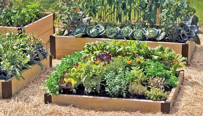 raised bed garden raised beds used to make a kitchen garden MFOLCQM