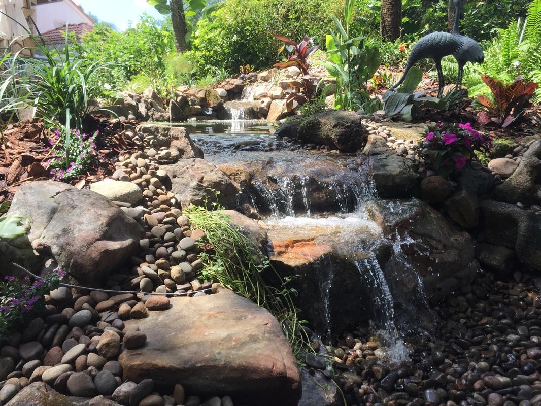 water gardens ecosystem pond new smyrna beach central florida UXWIQOB