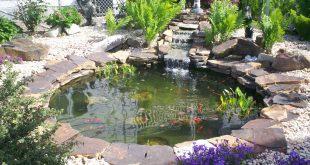 water gardens olympus digital camera pond after water garden 2 ... DACIVRH