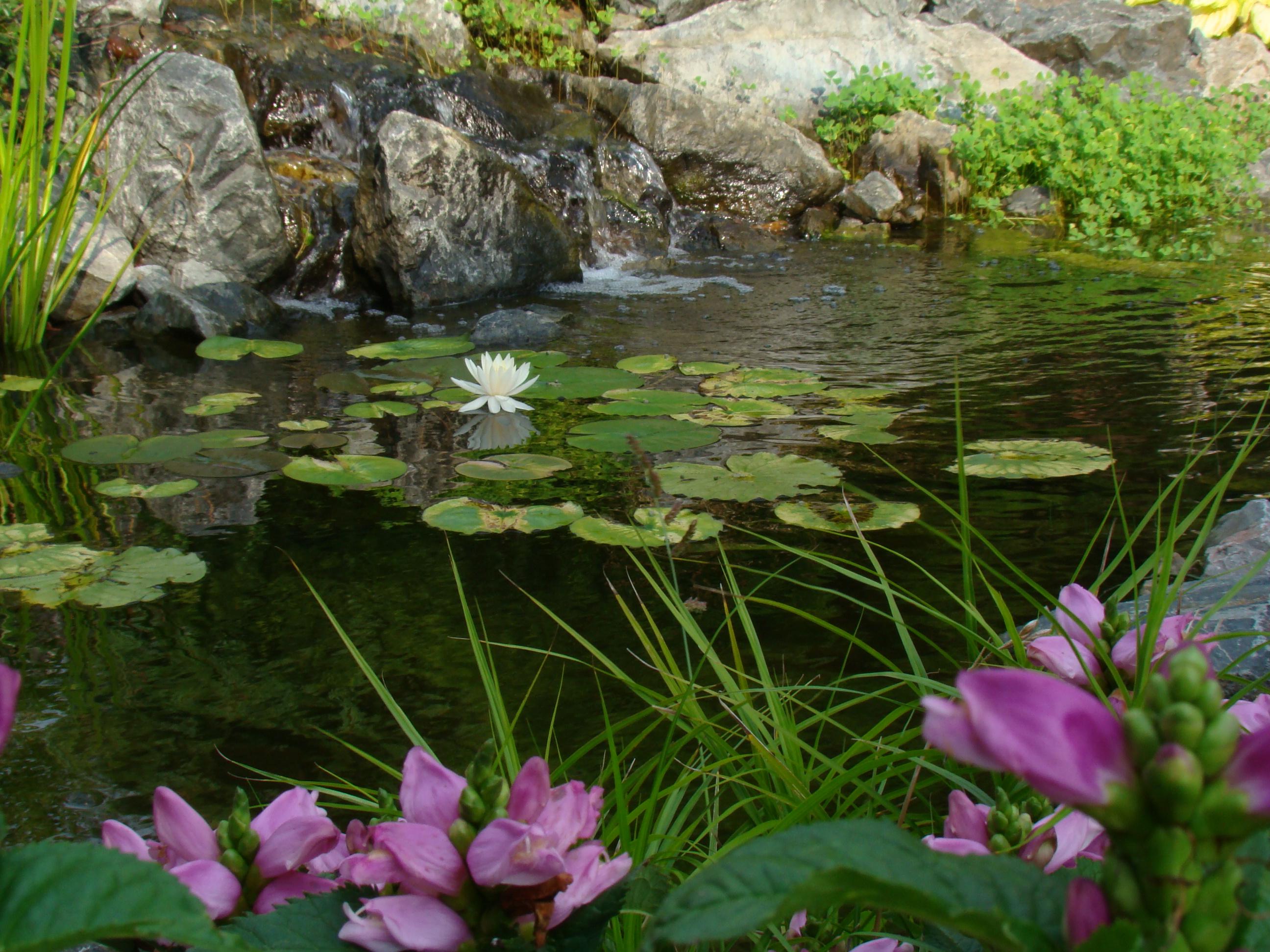 water gardens RYAVTYK