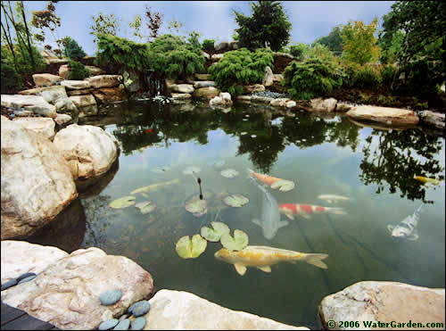 water gardens this 5,500 gallon pond was built using our tahiti pond kit. SZTQVTR