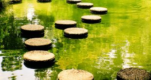 Stepping Stones how a stepping-stone role can help you make your career change | XMOXNQG